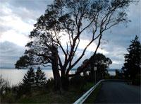 Everett Trees